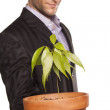 Man holding pot with a tree — Stock fotografie