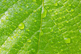 Beautiful green leaf with water drops close up — Stock Photo