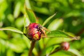 Guêpe assis sur une fleur — Photo