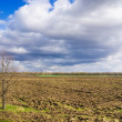 Spring landscape arable fields - Stock Photo