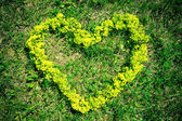 Heart of a flower on the grass — Stock Photo