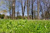 Hierba, azul cielo y los árboles — Foto de Stock