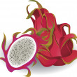 Stock Vector: Dragon fruit