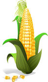 Corn — Stock Vector
