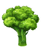 Broccoli. Vector illustration — Stock Vector