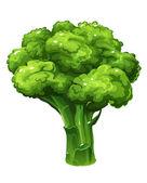Broccoli. Vector illustration — Stock Vector