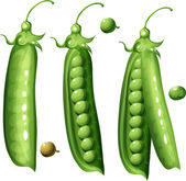 Peas — Stock Vector