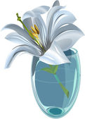 Lily in the vase — Stock Vector