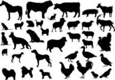 Pets & farm animals — Stock Vector