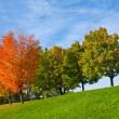 色彩缤纷的秋天的树木 — 图库照片