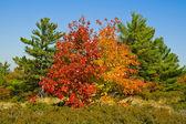 Colourful Autumn Trees — Stock Photo