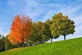 Kleurrijke herfst bomen — Stockfoto