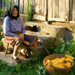 Old peasant woman harvests corncobs - Stock Photo
