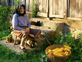 Old peasant woman harvests corncobs — Stock Photo