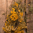 Dried tansy branches — Stock Photo