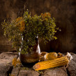 Still life with dried corn, blueberry and tansy branches — Stock Photo