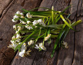 Fading snowdrops — Stock Photo