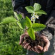 Farmer holding green young plant — Stock Photo