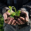 Farmer holding green young plant — Foto de Stock