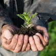 Stock fotografie: Farmer holding green young plant