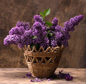 Blooming branches of lilac — Stock Photo