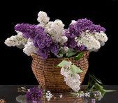 Bloeiende takken van lila — Stockfoto