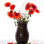 Bunch of poppies in vase — Stock Photo