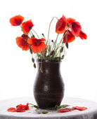 Bunch of poppies in vase — Stock Photo