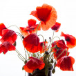 Bunch of poppies — Stock Photo