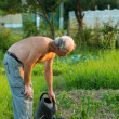 Farmer watering plants — Foto de Stock