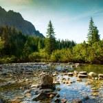 Mountain river in High Tatras in Slovakia — Stock Photo