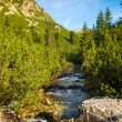Mountain river in High Tatras in Slovakia — Stock Photo