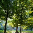 Green city park — Stock Photo #29658797