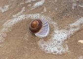 貝殻、砂のビーチ — ストック写真