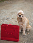 American spaniel and shopping bag — Stock Photo