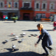 Child playing with doves — Stock Photo