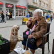 Old woman sitting in cafe with a dog — Stock Photo