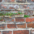 Old brick wall texture background — Stock Photo