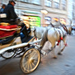 Horse-drawn carriage — Stock Photo