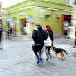 Couple walking with a dog — Stock Photo
