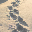 Footsteps — Stock Photo #39667883