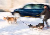 Dog team with kid on sledge — Fotografia Stock