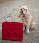 Cocker spaniel and shopping bag — Stock Photo