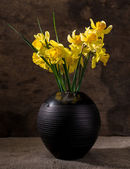 Beautiful daffodils in black vase — Stock Photo