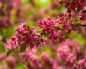 Red spring flowers — Stock Photo