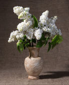 Blooming branches of lilac in vase — Stock Photo