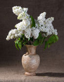 Blooming branches of lilac in vase — Foto de Stock