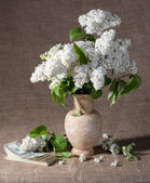 Blooming branches of lilac in vase and dollars — Stock Photo