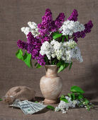 Blooming branches of lilac in vase and dollars  — Foto Stock