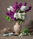 Blooming branches of lilac in vase and dollars — Stockfoto